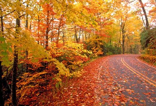 1345056425-fall-road