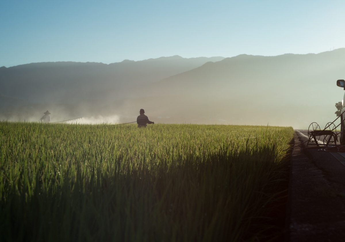 Russia seeds spring wheat at the highest pace in five years