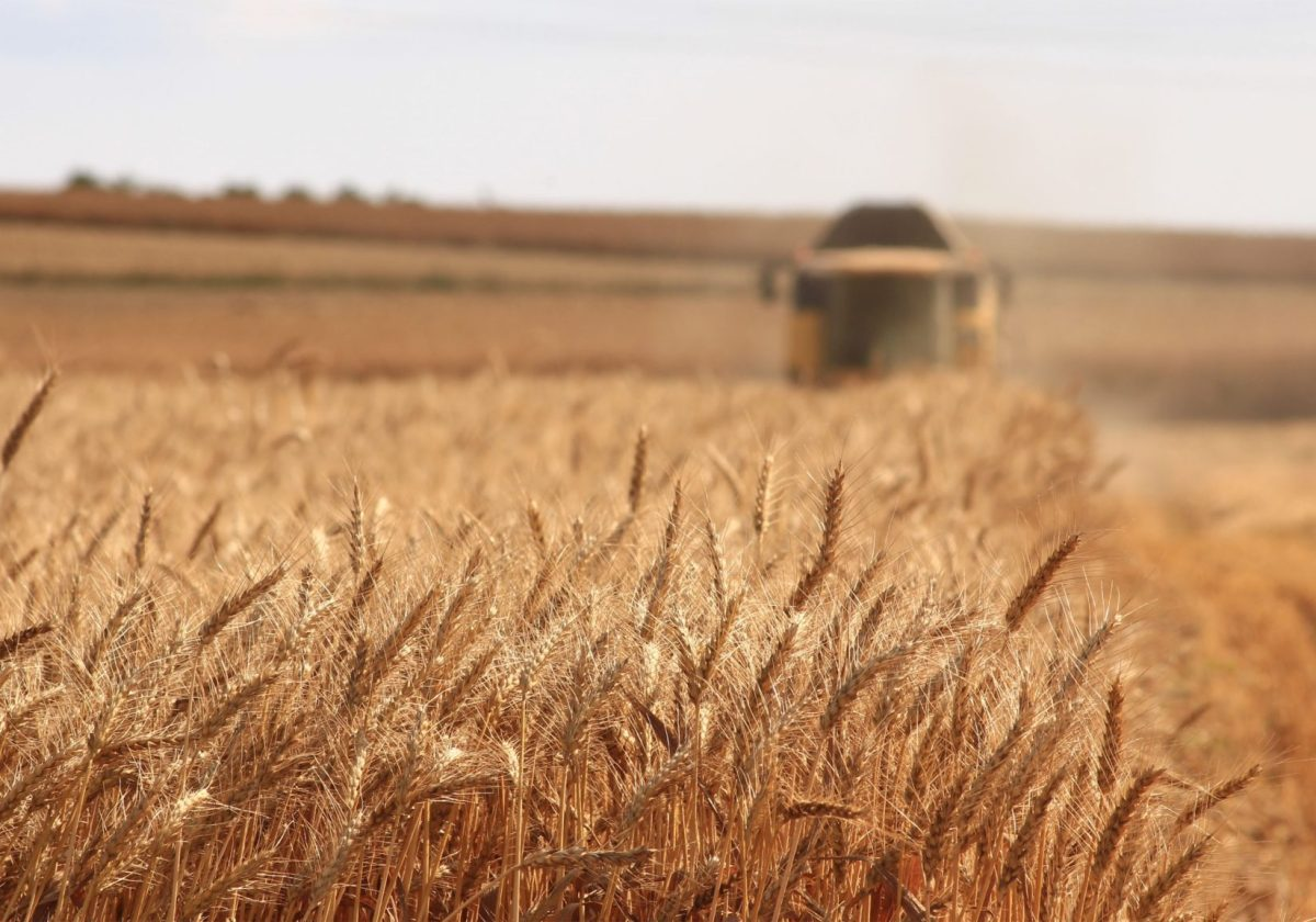 Russian wheat prices remain flat despite volatile global benchmarks