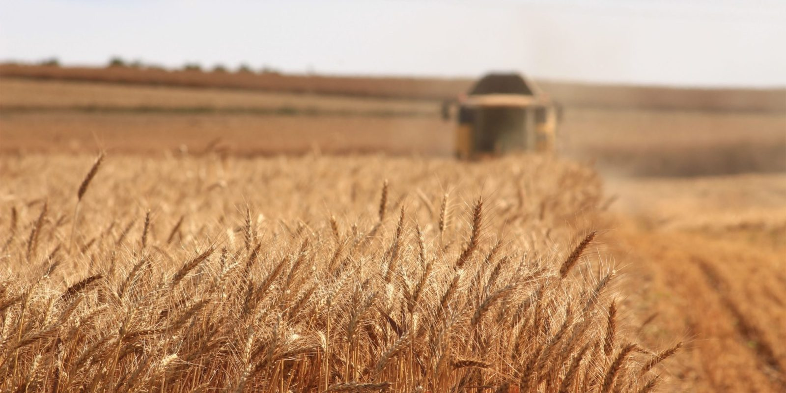 Russian wheat yields are growing