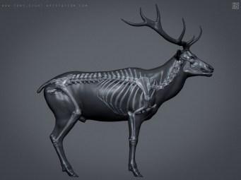 elk_deer_skin_04
