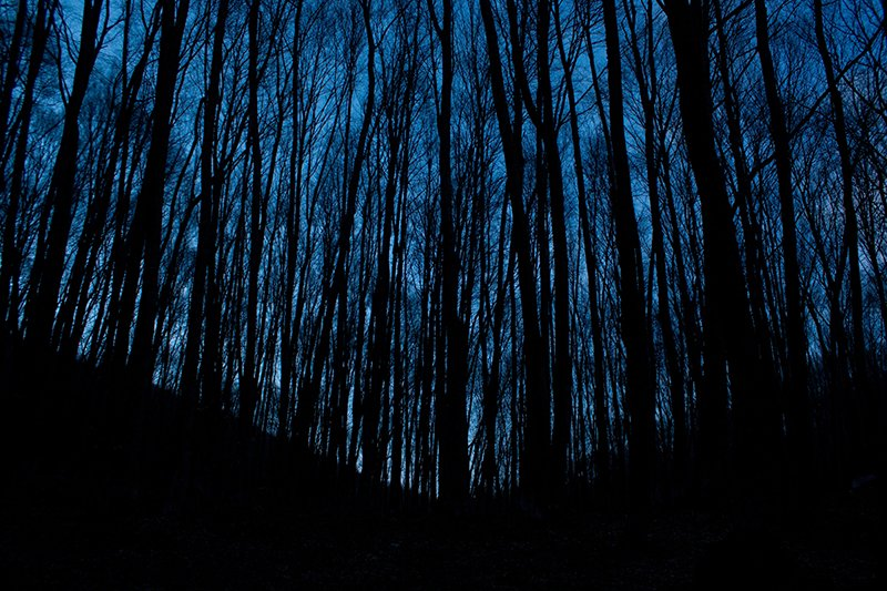 Silhouette of thin trees in a forest with sky at dusk