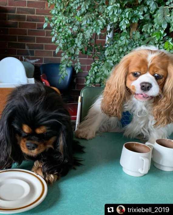 Dog-friendly cafes Cafe Komodo