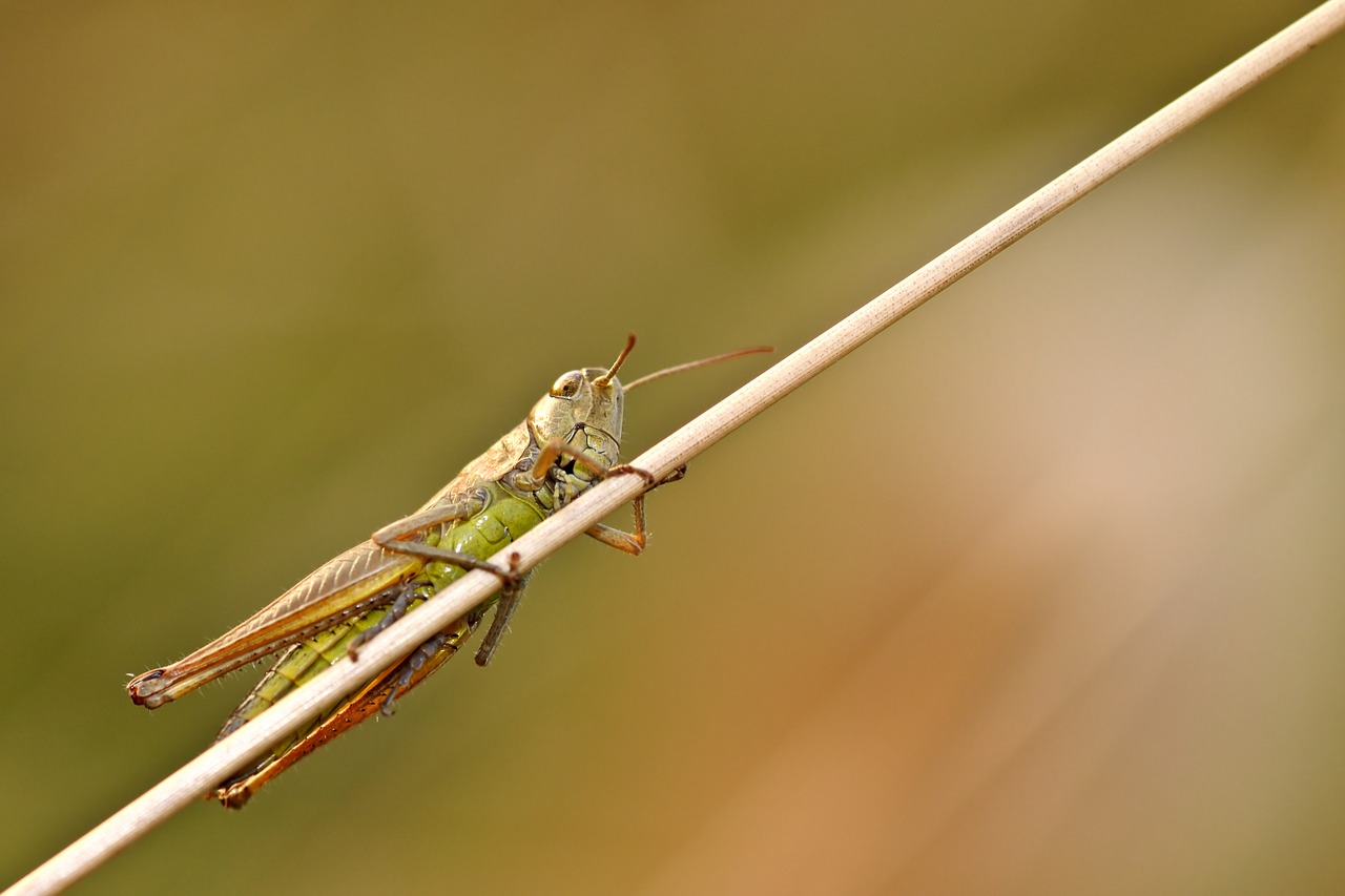 Les insectes sont-ils le futur de l'alimentation ?