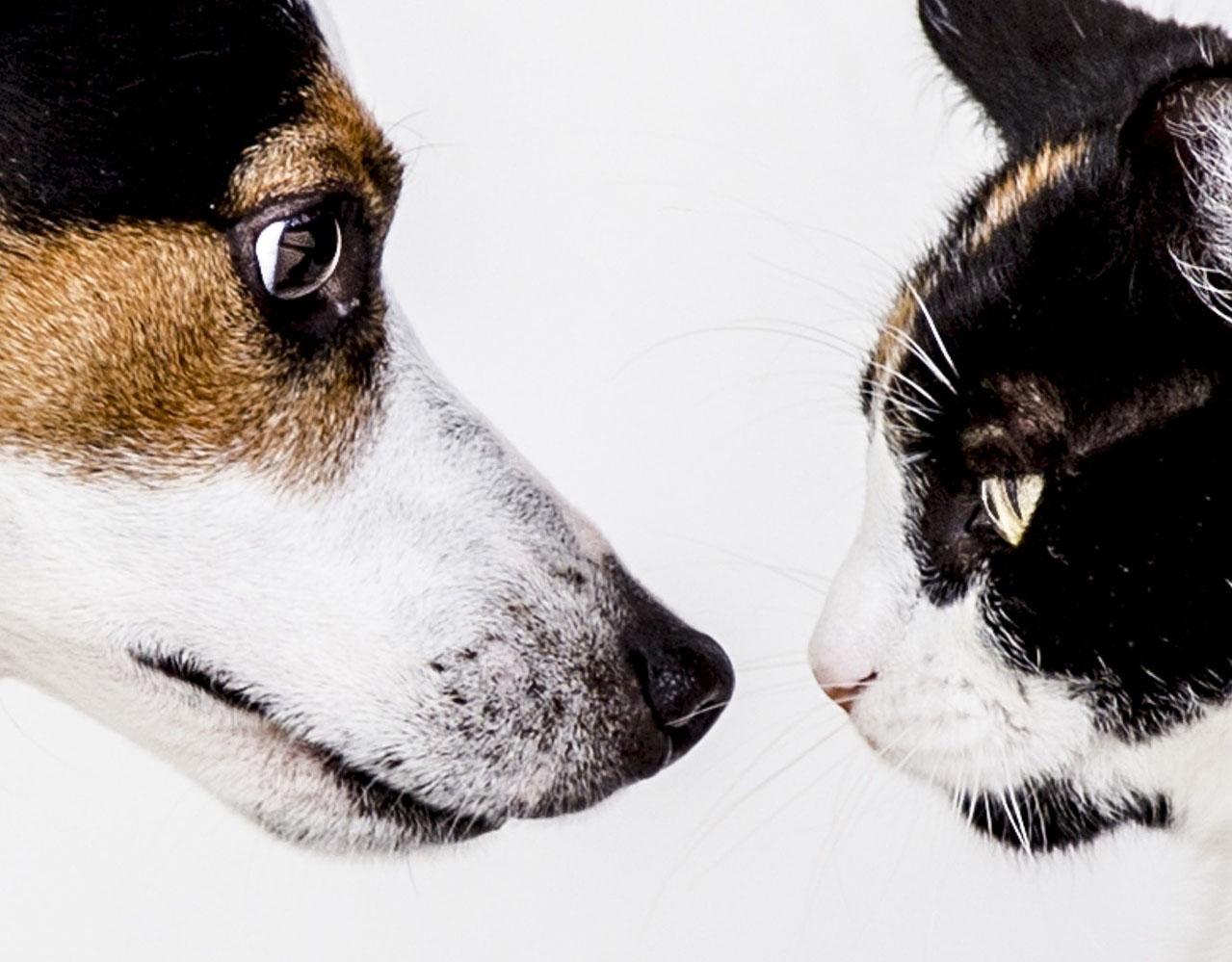 Le marché de la santé animale et ses enjeux pour la médecine humaine