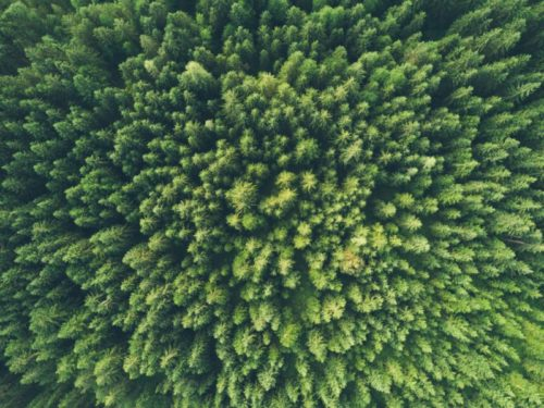 Journée mondiale de l'environnement : quels sont les défis de demain ?