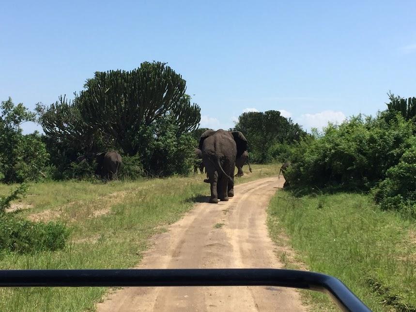 でも象があちこちにいるので(道をふさいでたり)、すぐに見慣れてしまう人間の怖さ