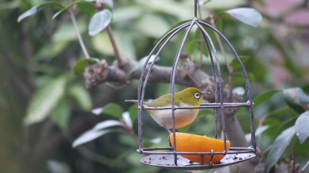 野鳥のエサ籠2 (1)