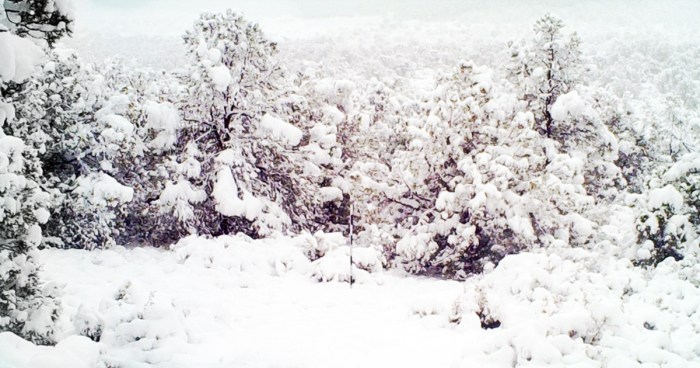 arizona-water-begins-in-the-forest-as-snow-and-rain