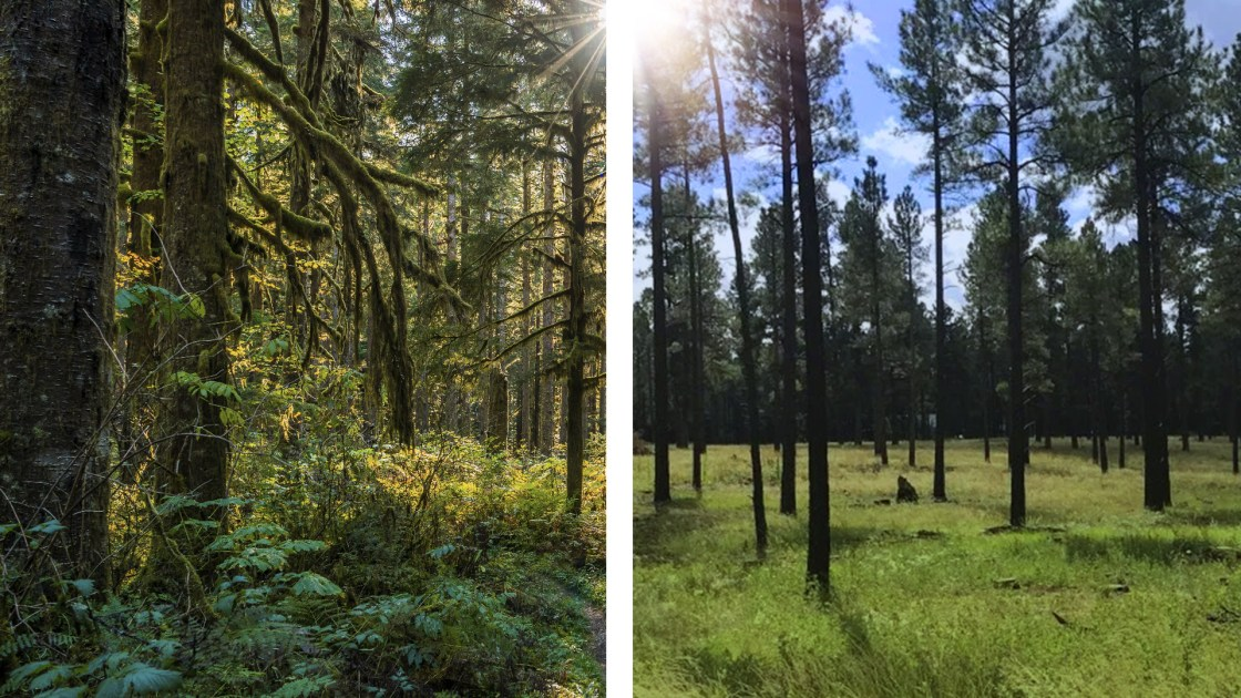 healthy-forests-strategic-thinning