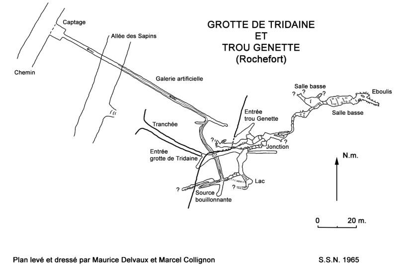 Tridaine1965z