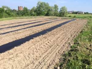 Picture of a field before planting seeds.