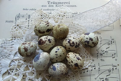 eggs, easter eggs, 2011, quail eggs, stock images free,