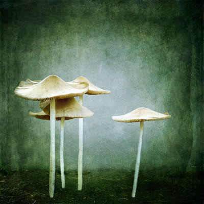 mushroom, mushrooms, white mushrooms, toadstools,