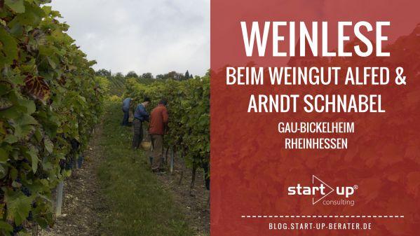 Weinlese in Rheinhessen - Pinot noir vom Weingut Alfred & Arndt Schnabel