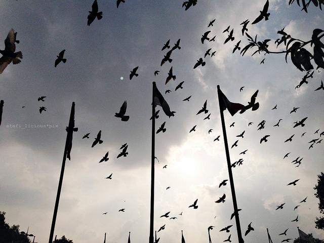 02_london_birds