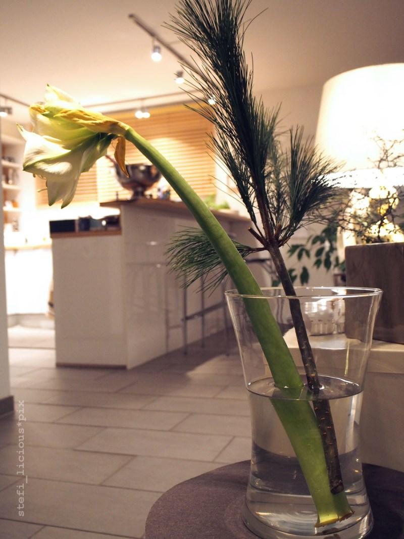 Amaryllis mit Blick zur Küche