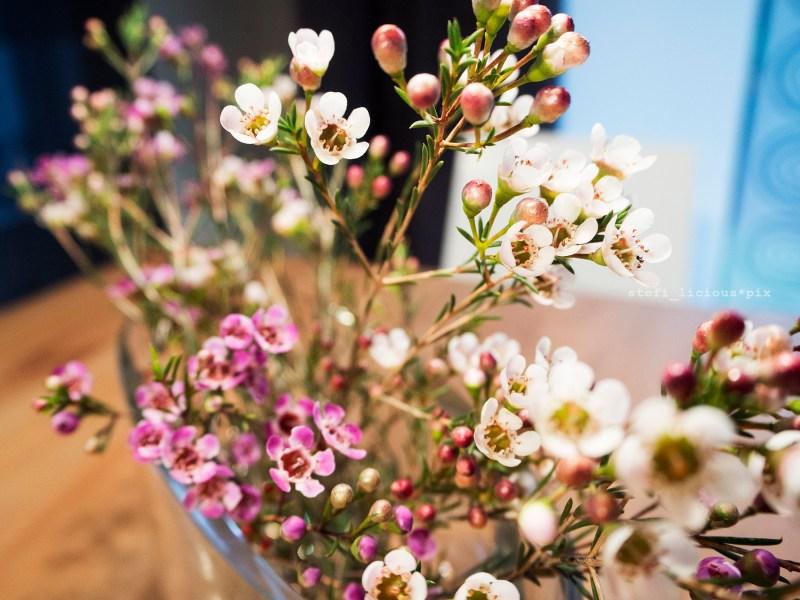 wachsblumen nah