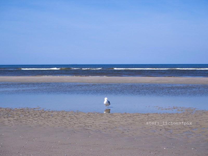Möwe am Strand von Juist