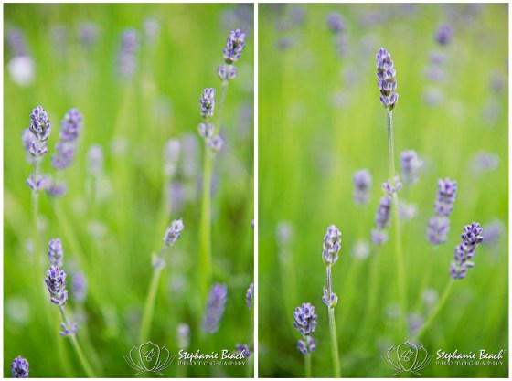 Small Depth of Field Flowers