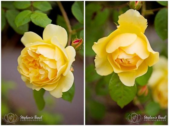 Seattle Flowers