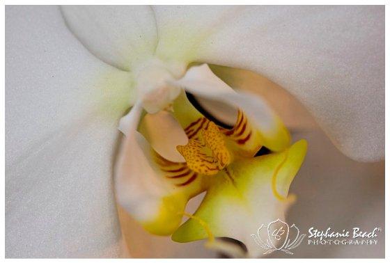 Stephanie Beach Photography - Ottawa Orchid Show