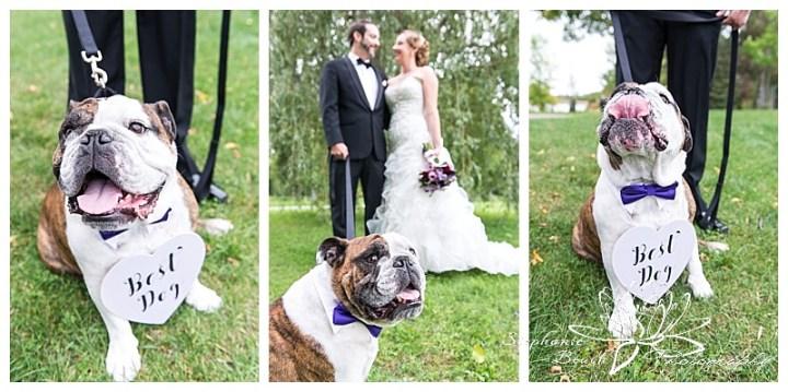 museum-of-nature-ottawa-wedding-stephanie-beach-photography-willow-tree-bride-groom-dog