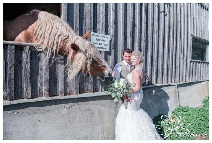 Stanleys-Olde-Maple-Lane-Farm-Wedding-Stephanie-Beach-Photography-bride-groom-horse-malcolm