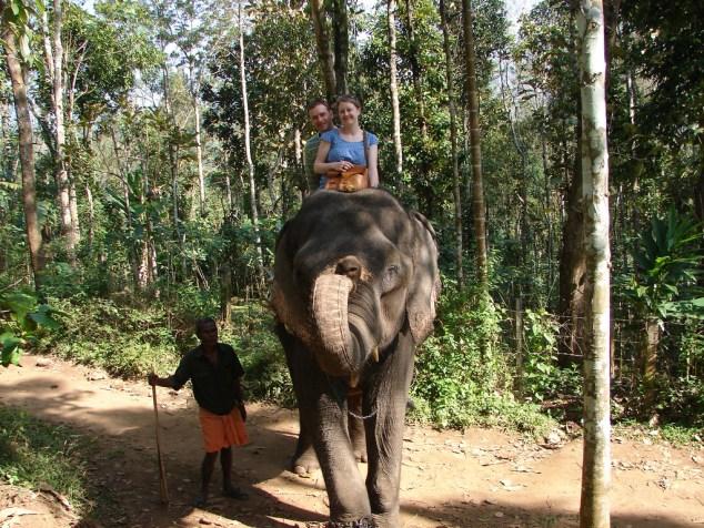 murikkady thekkady elephant ride image