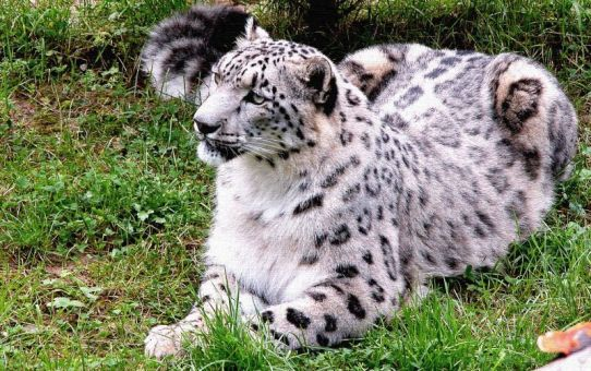 The Great Himalayan National Park: Home to the Snow Leopard