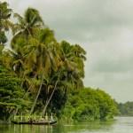 The Mystifying Mangroves of Kerala