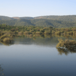 Tigers, Lost and Found: Sariska, Rajasthan