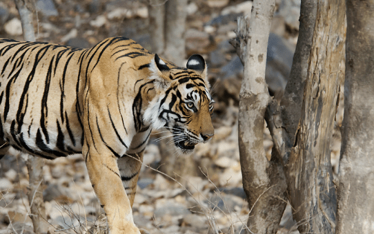Nature's Playground – Sariska Part IV