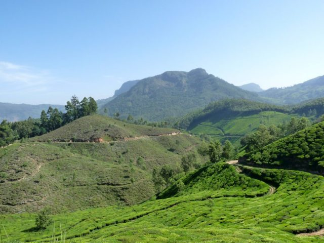 view_of_tea_plantations_in_munnar-1