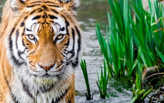 Top 7 Wildlife Destinations in India