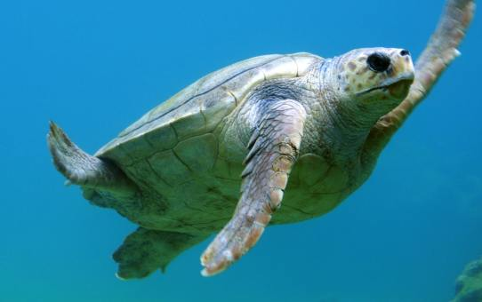 It is time to go turtle spotting on the exotic beaches of Puri