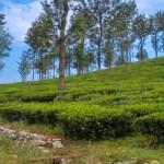 Wayanad Vlog – Sterling Resort Stay | Road Trip Via Bandipur Forest
