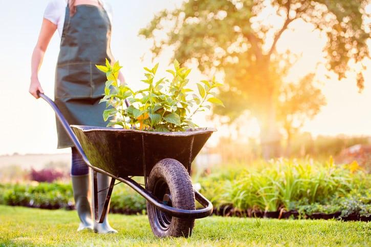 Kertépítési kisokos kezdő kertészeknek