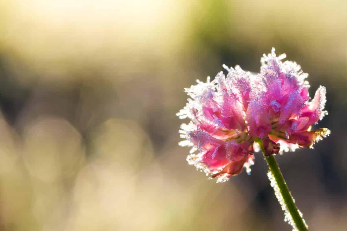 Kerti teendők novemberre – Ezeket a munkákat ne halogasd tovább, ha szeretnél gyönyörű kertet tavasszal