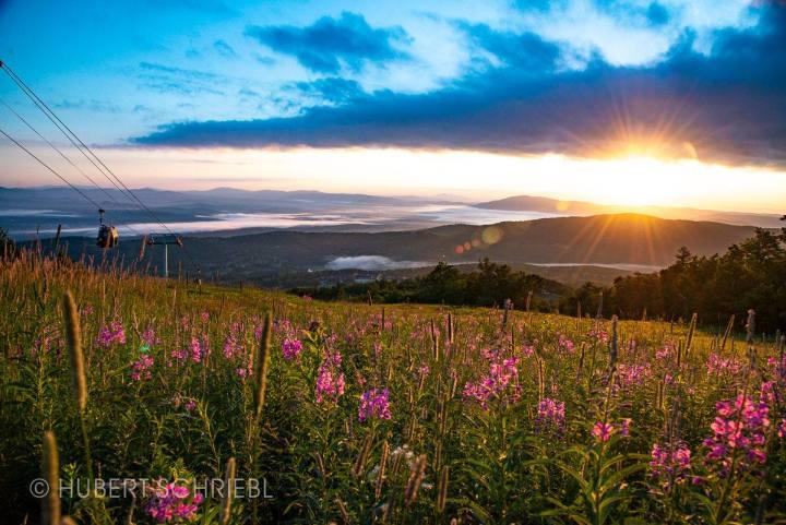 Sunrise & Flowers on Stratton Mountain