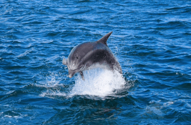 friendly dolphin