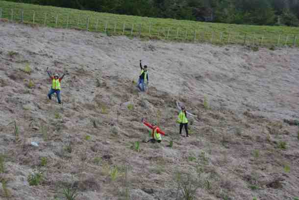 Stray team planting native trees on the hill
