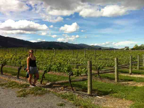 Wine tasting in Marlborough region