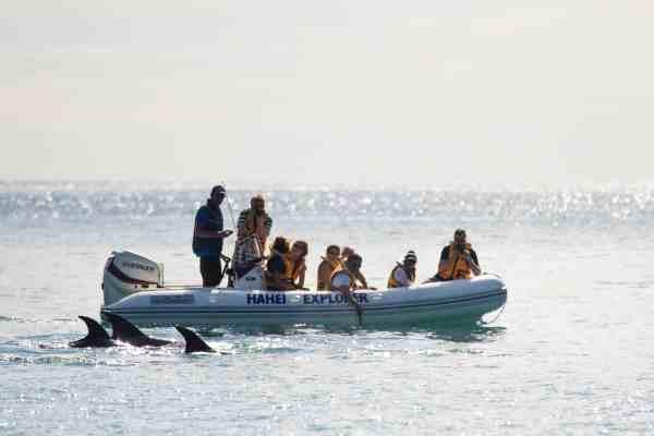 Hahei Explorer spots whales