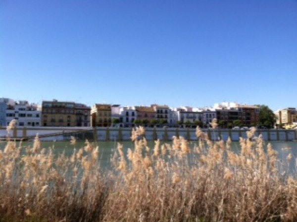 One of the many views you can enjoy alongside the river in Sevilla