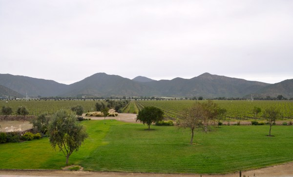 Wine Country, Emiliana, Casablanca, CHile, Holcomb - Photo 1