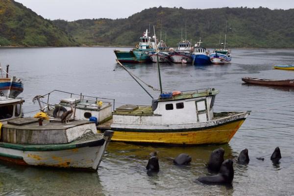 10 Puerto Montt, Chile, Kawahigashi