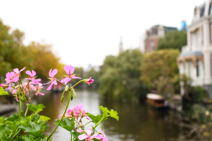 flowers-in-amsterdam-annissa-peterson-photo-11
