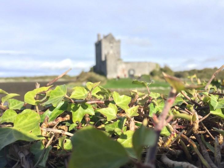 vinesandcastle_galway_ireland_carlyball_photo1