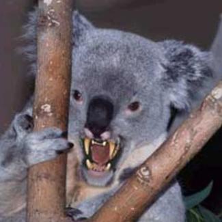 dropbear_sydney_australia_maryklepzig_photo1